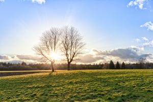 1410511_sunset_on_green_field_landscape - Copie